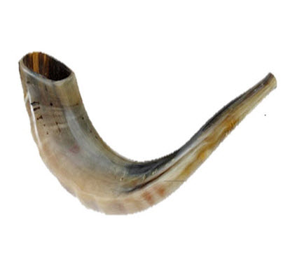 "Rams Horn - 10"" to 14"" - Natural Tones"
